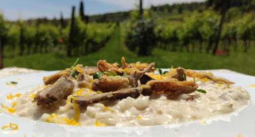Risotto carciofi, Bottarga di gallina Grisa e caprino fresco